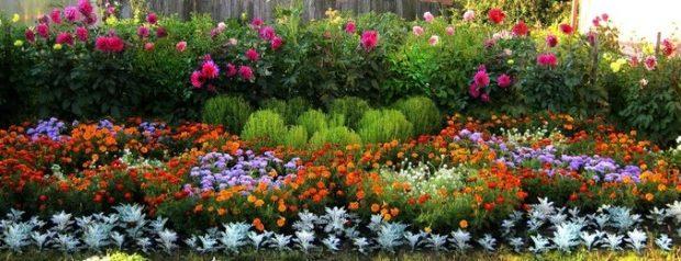Белые многолетние цветы фото и названия – Многолетние цветы для дачи. Каталог цветов, фото с названиями и кратким описанием